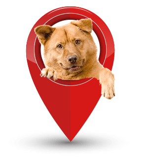 Dog in map pin