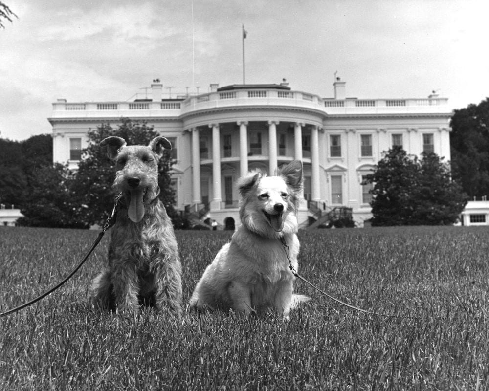 John F. Kennedy's mid 1900s presidentials dogs, Pushinka and Charlie