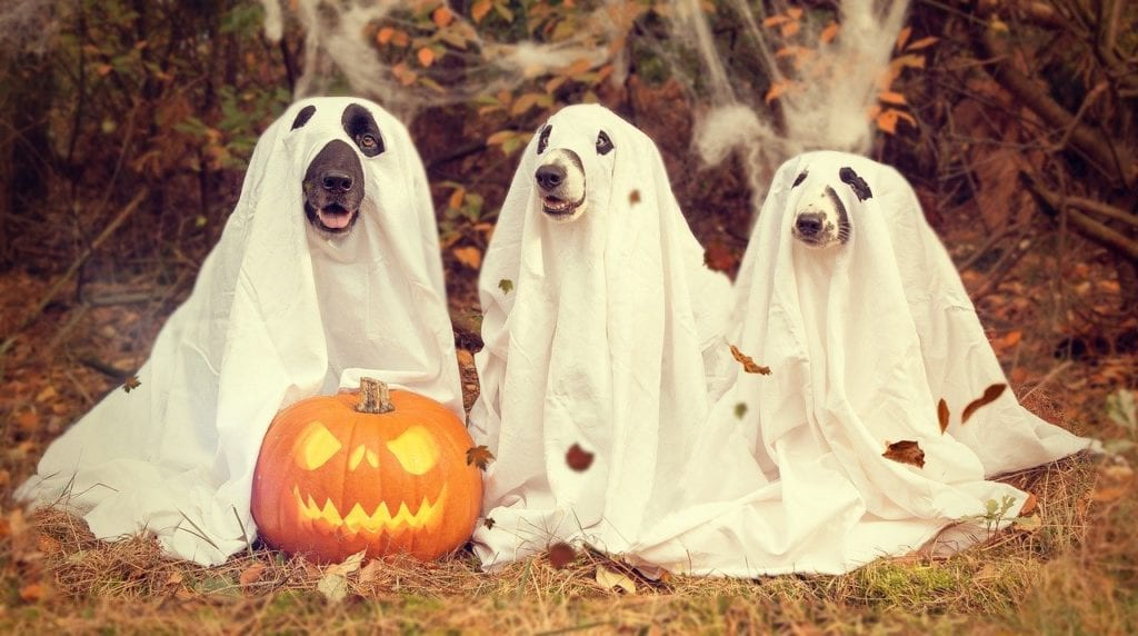 Three dogs dressed in sheets as ghosts. These dogs feel safe in a Halloween costume.