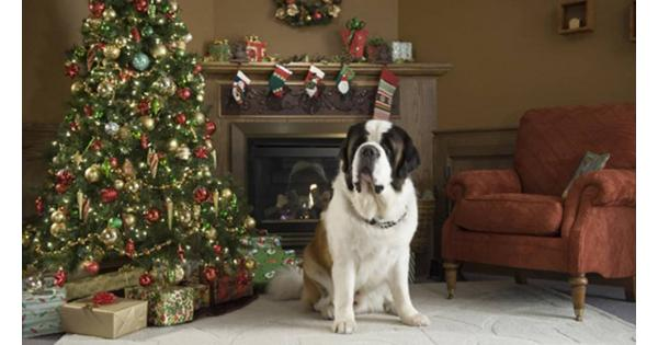 Beethoven's Christmas Adventure is a Christmas dog movie with a talking dog