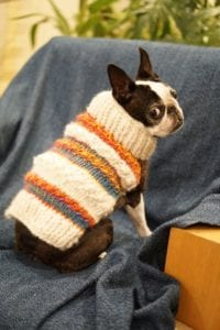 Keeping Dogs Comfortable This Winter