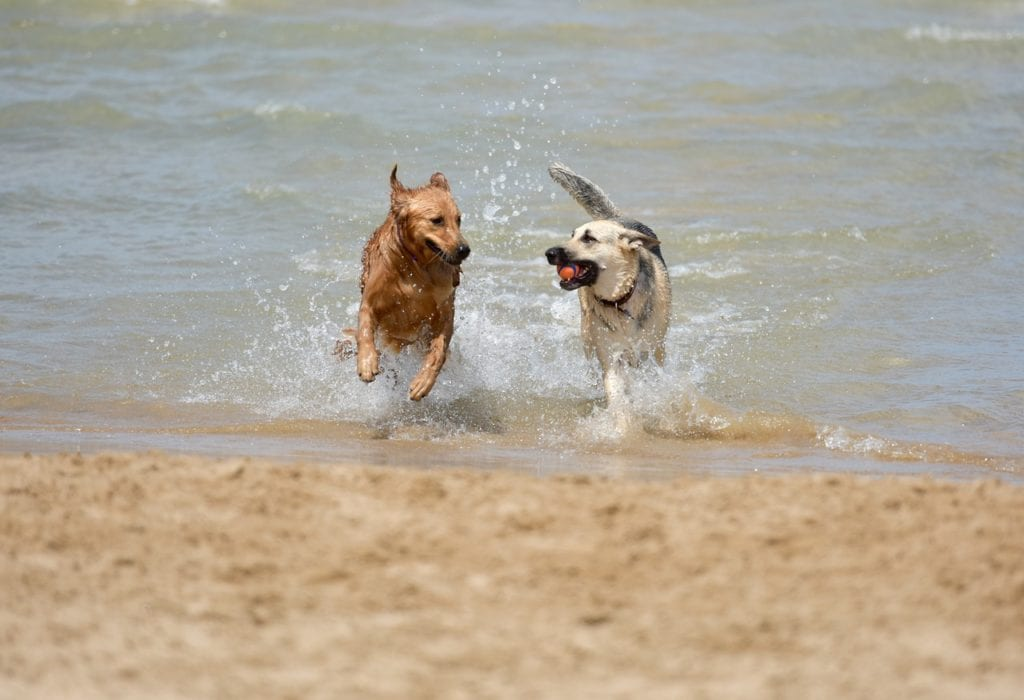 Some dog friendly cities have off-leash beaches perfect for swimming