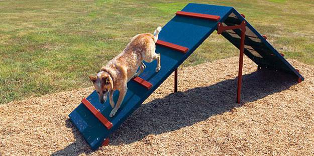The A-frame is one of the common dog agility course obstacles.