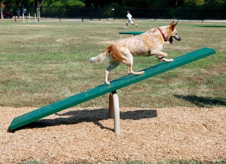 The seesaw is one of the common dog agility course obstacles.