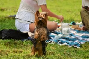 Tips for a Dog Friendly Picnic