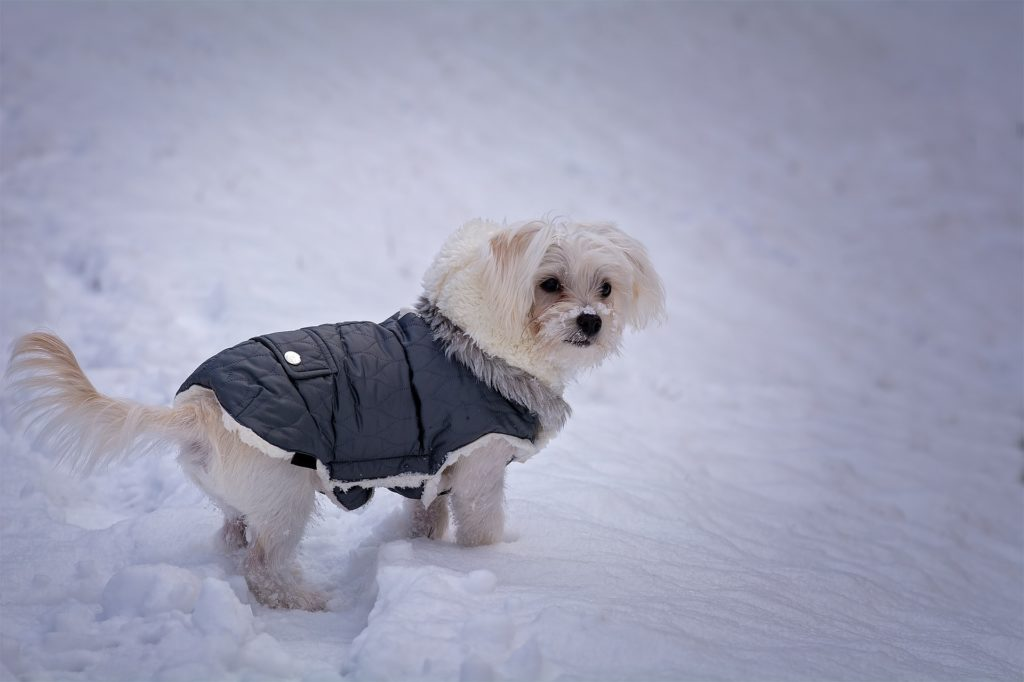 Keeping your dog warm in the cold is one of the main reasons dogs should wear clothes.