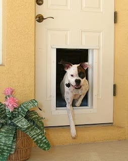 Plexidor electronic pet door dog exiting