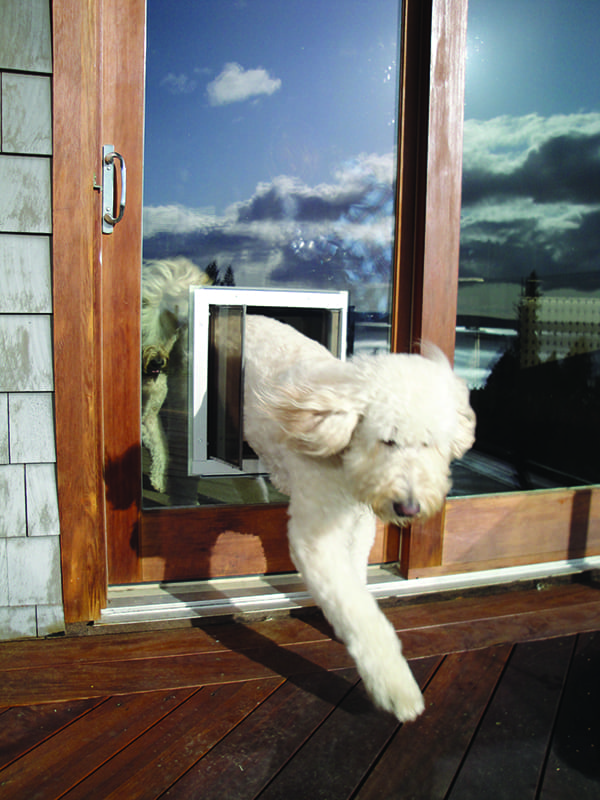 Plexidor Dog Door through glass