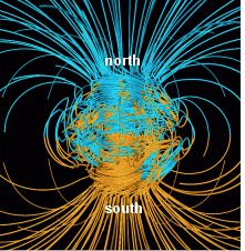 Dogs are sensitive to the Earth's magnetic field