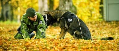 Swedish army dog