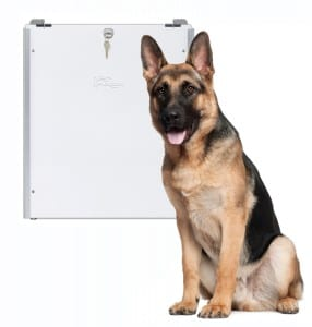German Shepherd with PlexiDor dog door