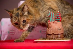 Poppy is the world's oldest now living cat and recently celebrated her 24th birthday.